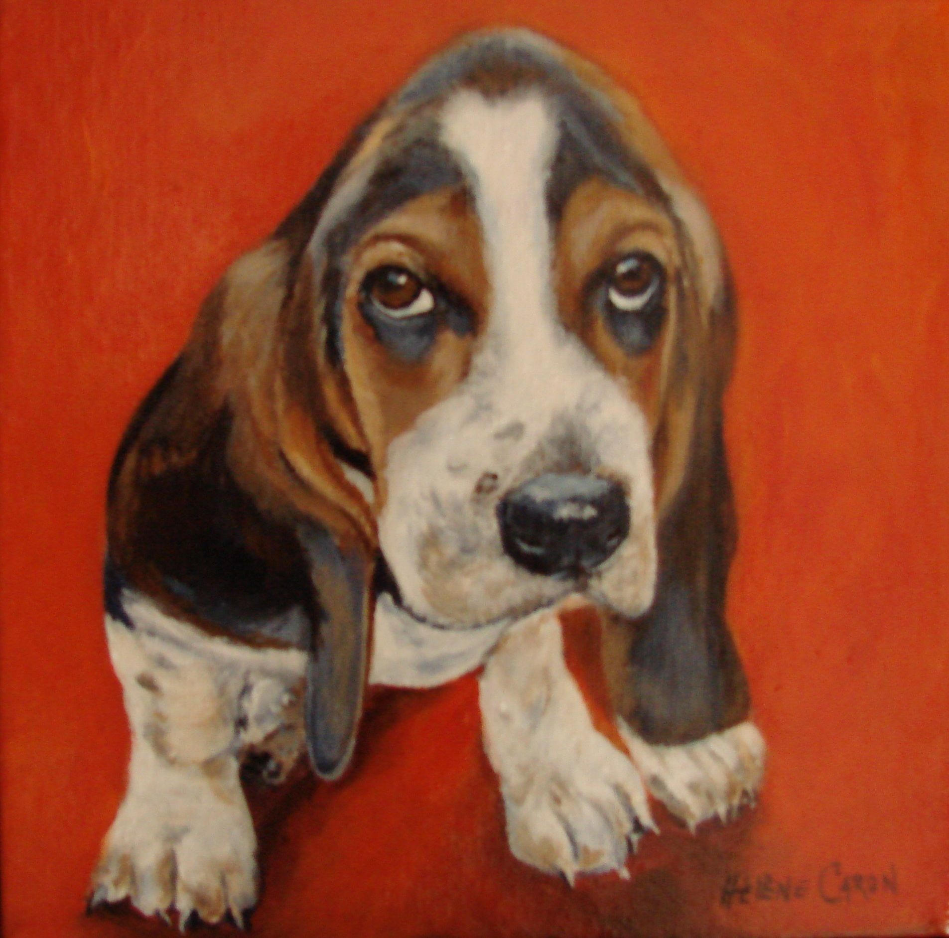 Peindre le cheval page 3 - Petit basset hound angers ...